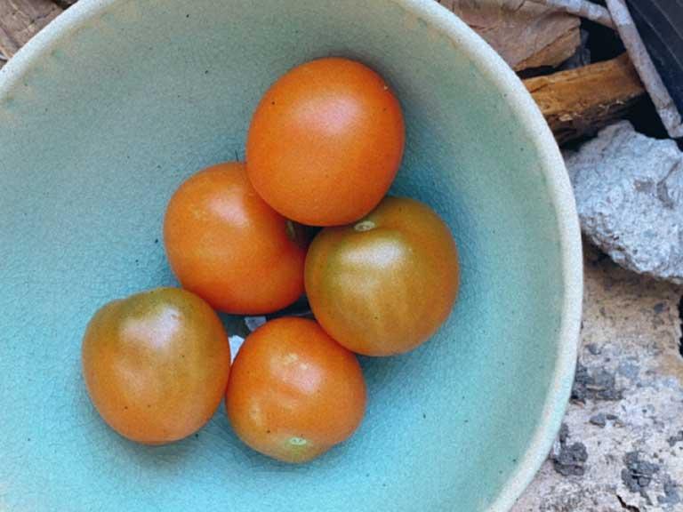 alimentacion saludable comida organica